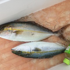 8月30日(金)午前便・タテ釣りの写真その3