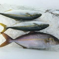 8月 31日(土) 午前・午後・タテ釣りの写真その5