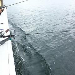8月 31日(土) 午前・午後・タテ釣りの写真その11