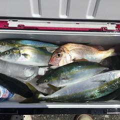 9月4日(水)午前便・タテ釣りの写真その4