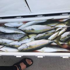 9月 7日(土) 午前・午後・タテ釣りの写真その11