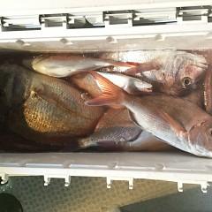 9月 17日(火) 午前・タテ釣り 午後・ウタセ真鯛の写真その9