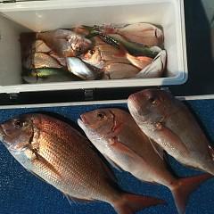 9月 17日(火) 午前・タテ釣り 午後・ウタセ真鯛の写真その12