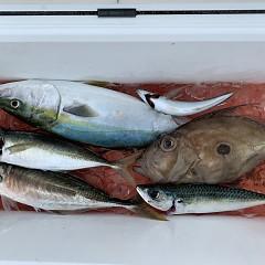 9月18日(水)午前便、タテ釣りの写真その4