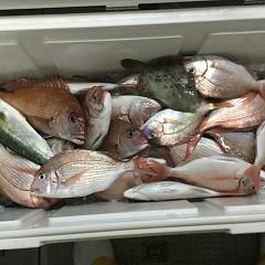 9月 18日(水) 午後便・ウタセ真鯛の写真その7