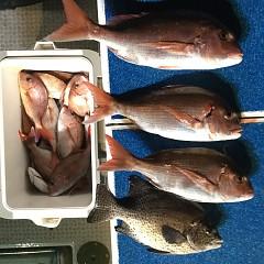 9月 19日(木) 午前・タテ釣り 午後・ウタセ真鯛の写真その8