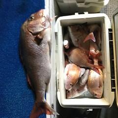 9月 19日(木) 午前・タテ釣り 午後・ウタセ真鯛の写真その9