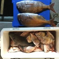 9月 19日(木) 午前・タテ釣り 午後・ウタセ真鯛の写真その10