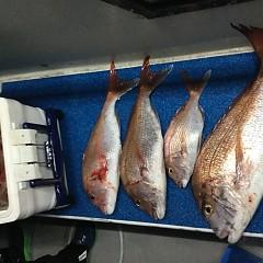 9月 19日(木) 午前・タテ釣り 午後・ウタセ真鯛の写真その11