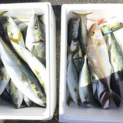 9月 29日(日) 午前便・タテ釣りの写真その4