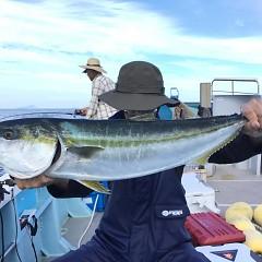 9月 29日(日) 午後便・ウタセ真鯛の写真その4