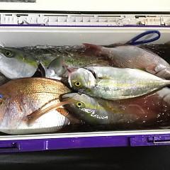 9月 29日(日) 午後便・ウタセ真鯛の写真その9