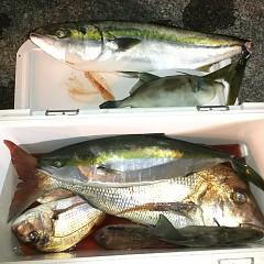 9月 29日(日) 午後便・ウタセ真鯛の写真その10