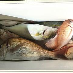 9月 30日(月) 午後便・ウタセ真鯛の写真その4