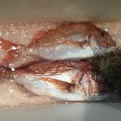 9月 30日(月) 午後便・ウタセ真鯛の写真その7