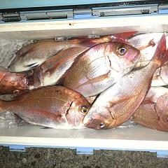 10月 6日(日) 午前便・午後便・ウタセ真鯛の写真その7