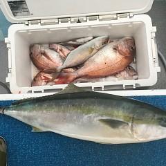 10月 7日(月) 午後便・ウタセ真鯛の写真その6
