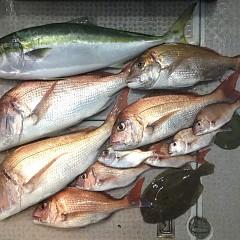 10月 7日(月) 午後便・ウタセ真鯛の写真その7