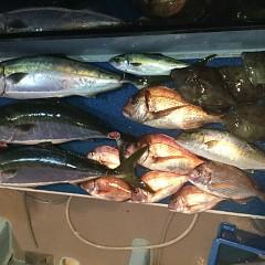 10月 7日(月) 午後便・ウタセ真鯛の写真その8