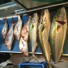 10月 7日(月) 午後便・ウタセ真鯛の写真その9