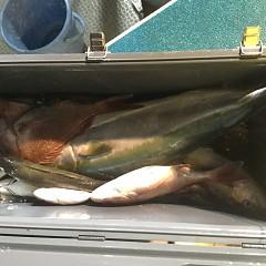 10月 7日(月) 午後便・ウタセ真鯛の写真その11