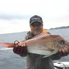 10月 8日(火) 午後便・ウタセ真鯛の写真その3