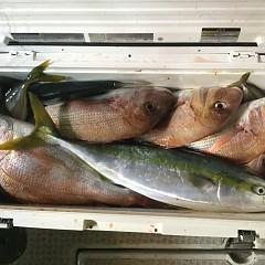 10月 8日(火) 午後便・ウタセ真鯛の写真その5