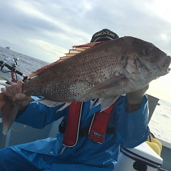 10月 19日(土) 午後便・ウタセ真鯛の写真その2