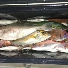 10月 19日(土) 午後便・ウタセ真鯛の写真その6