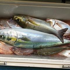 10月 19日(土) 午後便・ウタセ真鯛の写真その7