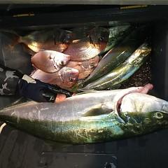 10月 19日(土) 午後便・ウタセ真鯛の写真その8
