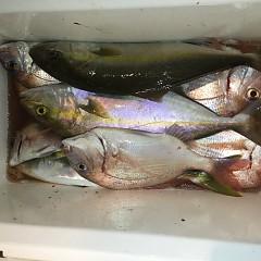 10月 19日(土) 午後便・ウタセ真鯛の写真その9