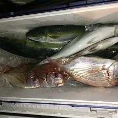 10月 19日(土) 午後便・ウタセ真鯛の写真その10