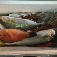 10月 19日(土) 午後便・ウタセ真鯛の写真その11