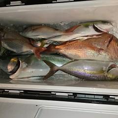 10月 19日(土) 午後便・ウタセ真鯛の写真その12