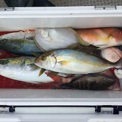 10月 20日(日) 午前便・ウタセ真鯛の写真その5