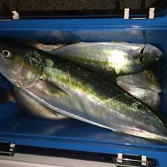 10月 20日(日) 午後便・ウタセ真鯛の写真その5