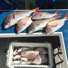 10月 23日(水) 午前便・ウタセ真鯛の写真その4