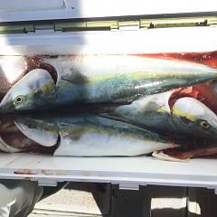 10月 23日(水) 午前便・ウタセ真鯛の写真その5