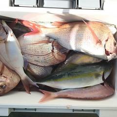10月 23日(水) 午前便・ウタセ真鯛の写真その6