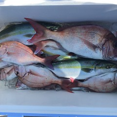 10月 30日(水)午前・ 午後便・ウタセ真鯛の写真その5