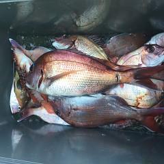 10月 30日(水)午前・ 午後便・ウタセ真鯛の写真その6
