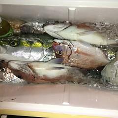 10月 30日(水)午前・ 午後便・ウタセ真鯛の写真その7