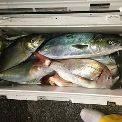 10月 30日(水)午前・ 午後便・ウタセ真鯛の写真その11