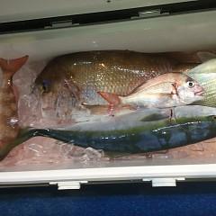 10月 31日(木)午後・ウタセ真鯛の写真その6