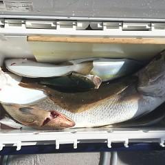 11月 3日(日) 午前便・ヒラメ釣りの写真その6