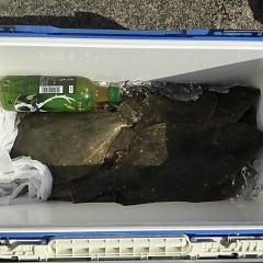 11月 14日(木) 午前便・ヒラメ釣り 午後便・ウタセ真鯛の写真その3