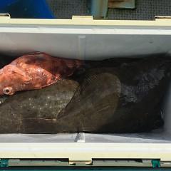 11月 14日(木) 午前便・ヒラメ釣り 午後便・ウタセ真鯛の写真その5