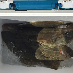11月 15日(金) 午前・ヒラメ釣り 午後・ウタセ真鯛の写真その6