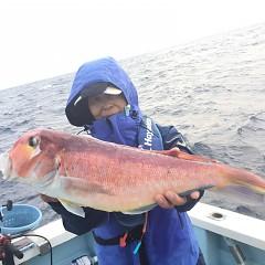 11月 27日(水) 午後便・ウタセ真鯛の写真その3